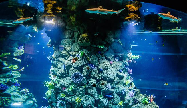Poema del Mar Aquarium LasPalmas