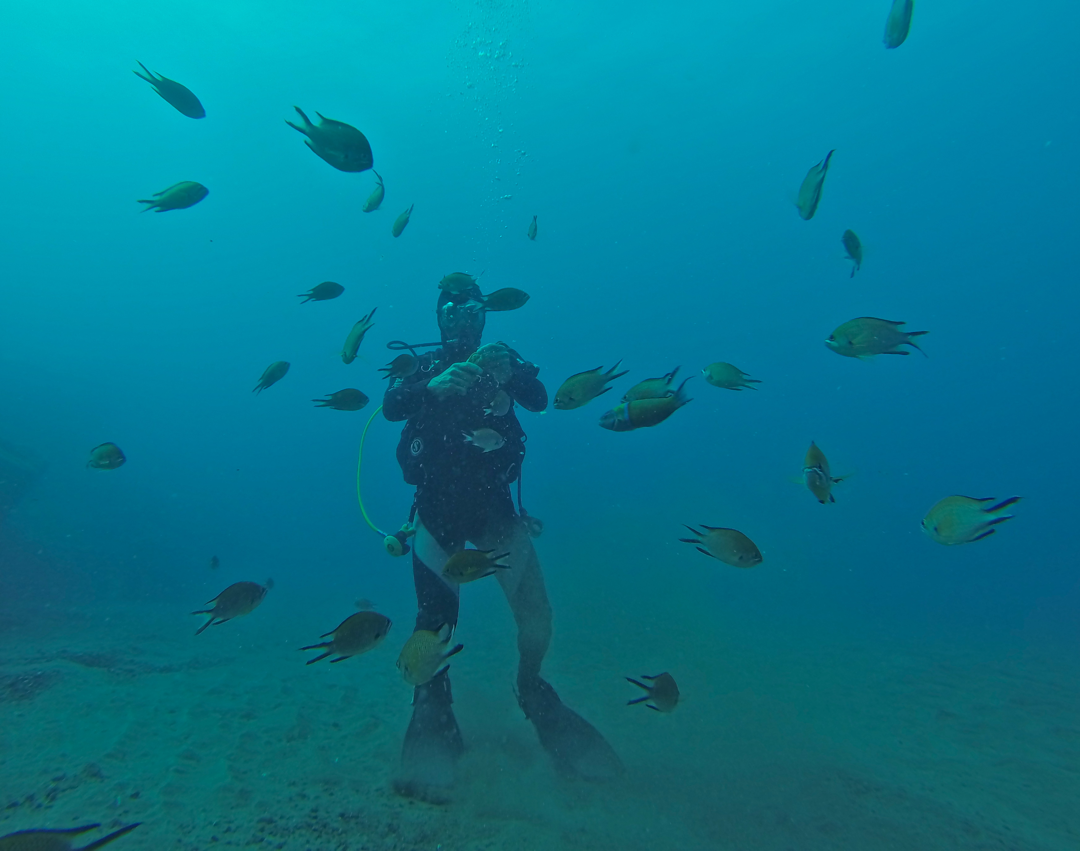 Diving in Amadores